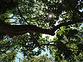 Look up - panoramio (1).jpg