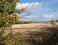 Looking across fields beside Low Lane, near Creeting St Mary - geograph.org.uk - 597829.jpg