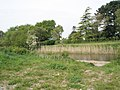 Looking across the Chichester Canal from Bridge Farm towards the old Manor House - geograph.org.uk - 789080.jpg