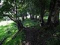 Loutrezo, au cœur du parc des volcans d'Auvergne, dans le département du Cantal. - panoramio (6).jpg