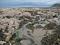Low tide at Rowden Gut - geograph.org.uk - 1430893.jpg
