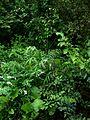 Lower shade border - Flickr - peganum (1).jpg