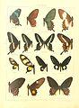Macrolepidoptera15seit 0011.jpg