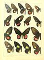 Macrolepidoptera15seit 0013.jpg