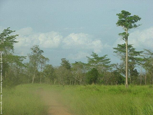 Parco nazionale di Maduru Oya