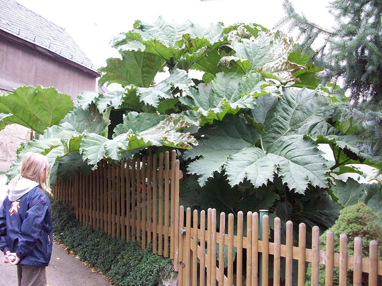 höga växter utomhus