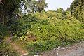 Manasa Mound - South-western View - Manasapota - Simurali 2016-12-18 2206.JPG