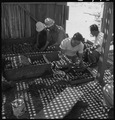 Manzanar Relocation Center, Manzanar, California. A view of section of the lath house at this War . . . - NARA - 538034.tif