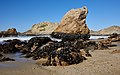 McClures Beach, Point Reyes National Seashore.jpg