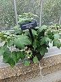 Medicinal Plants - US Botanic Gardens 17.jpg