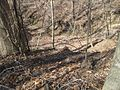 Meeman-Shelby Forest State Park Shelby County TN 2014-02-23 001.jpg