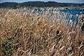 Mendocino Headlands State Park 18 - 28462973657.jpg