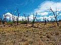 Mesa Verde National Park-42.jpg
