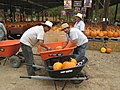 Mexican Laborers at a Pumpkin Patch, Yucaipa, California.jpg