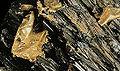 Mineraly.sk - zlato.jpg