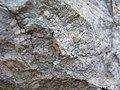 Minerve nummulites (998734162).jpg