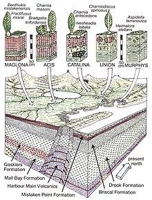 Ediacaran Biota - Wikipedia