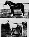 Modern horse management (microform) (1914) (20029412764).jpg