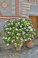 Monastery of Saint George Selinari Crete flowers museum.jpg