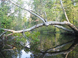 Mullica River - Mullica River northwest of Lake Atsion