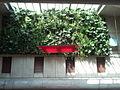 Mur vegetal2 GareMagenta.jpg