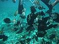 Museo Subacuatico.jpg