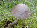 Mushroom (1468303726).jpg
