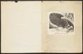 Myrmecophaga jubata - 1700-1880 - Print - Iconographia Zoologica - Special Collections University of Amsterdam - UBA01 IZ21000038.tif