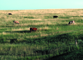 NRCSSD85001 - South Dakota (6185)(NRCS Photo Gallery).tif