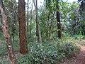 Nairobi Arboretum Park 37.JPG