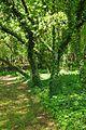 Nationalpark Müritz - alter Friedhof Krienke (2).jpg