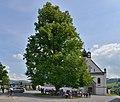Naturdenkmal Linde und Pfarrkirche hl. Petrus & Paulus in Andelsbuch.JPG