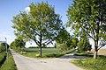 Naturdenkmal Obstbaum- und Lindenallee am Dreispitz, Kennung 81150530016, Jettingen-Sindlingen 15.jpg