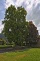 Naturdenkmal Zwei Alte Linden, Kennung 82350800009, Schloßruine, Wildberg 09.jpg