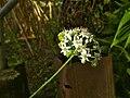 Nature Beauty Flowers.jpg