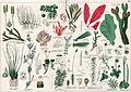 Naturgeschichte des Pflanzenreichs Tafel LII.jpg