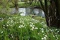 Naturschutzgebiet Chemnitzaue bei Draisdorf. 7.jpg