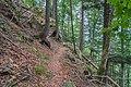 Naturschutzgebiet Feldberg (Black Forest) - Alpiner Steig am Feldberg - Bild 012.jpg