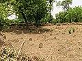 Nicholson (Or Kashmiri Gate) Cemetery Kashmiri Gate Delhi IMG 20180530 122019.jpg