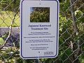 Not weed, knotweed! (Point Pleasant Park, Halifax NS, June 13 2008) (2575315625).jpg