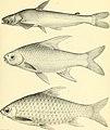 Nouvelles archives du Muséum d'histoire naturelle (1881) (14586251159).jpg