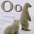 O is for Orso.jpg