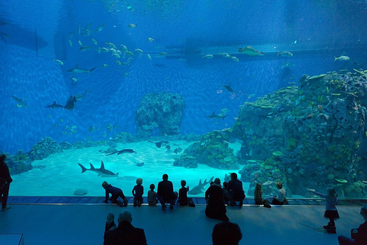 Acquario Di Danimarca Wikipedia