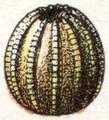 Oeufs002b,71.png