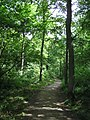 On the Church Path Trail - July 2009 - panoramio.jpg