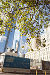 One WTC behind some trees.jpg