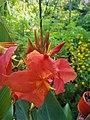 Orange Canna Lily (9).jpg