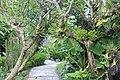 Orchid Garden Bali Indonesia - panoramio (26).jpg