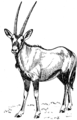 Oryx 1 (PSF).png