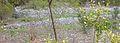 Otter Mound welk terraces.JPG